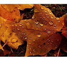 Rain on Leaf Photographic Print