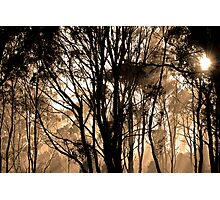epping forest Photographic Print