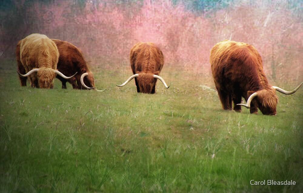 Herd by Carol Bleasdale