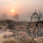Studland Mist by banny