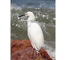 Red Rocks, White Heron, Blue Ocean - Rocas Rojas, Garza Blanca, Oceano Azul Photographic Print