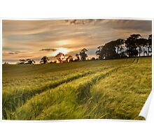Barley Field Sunset Poster