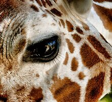 Giraffe by Kingstonshots