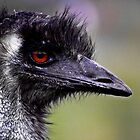 Old Man Emu by myraj