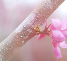 pink blossoms 2 by Jamie McCall