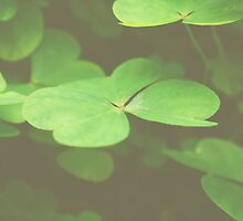 clovers1 by Jamie McCall