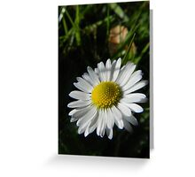 Daisy Daisy Greeting Card