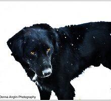 My Dog by Donna Anglin Husband