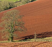 Tree and red Devon soil by peteton