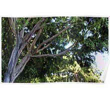 Nekkie Tree Poster