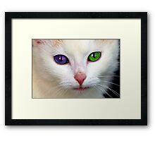 Shiloh Framed Print
