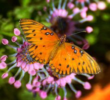 Julia Butterfly  by Saija  Lehtonen