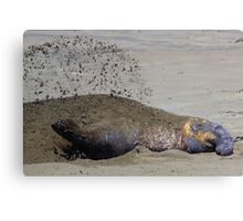Sandy Blanket Canvas Print