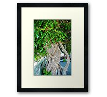 Twisted Tree Framed Print