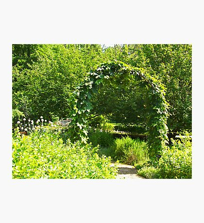 A Natural Garden Arch Photographic Print