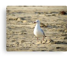 Lonely Seagull Canvas Print