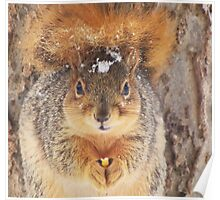 Squirrel Tail Cap Poster