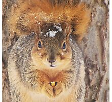 Squirrel Tail Cap Photographic Print