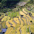 Filipino Rice Terraces by Jane McDougall
