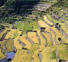 Filipino Rice Terraces by Jane McDougall