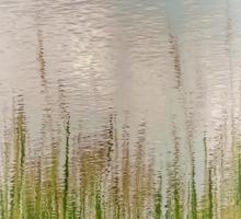 Spring Reflections Sticker
