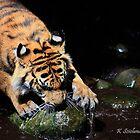 A big tigers paw by bluetaipan