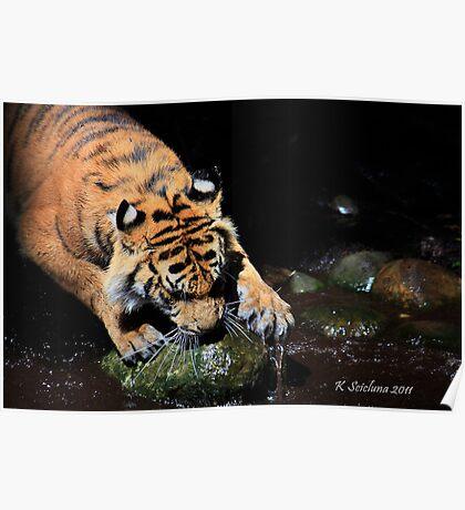 A big tigers paw Poster