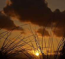 Swaying in the wind by Steve winters Photography