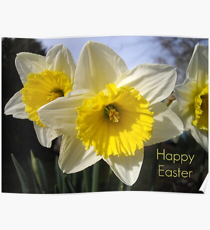 Easter Daffodils Poster