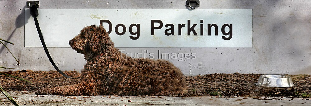 1 Hr Parking .... by Trudi's Images