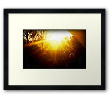 The Sound of SunShine Framed Print