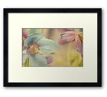 Early summer Framed Print