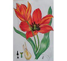 flower4 Photographic Print