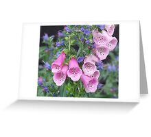 Foxglove and Viper's Bugloss Greeting Card