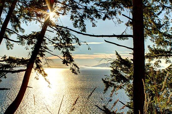Shining on Golden Bay by Dale Lockwood