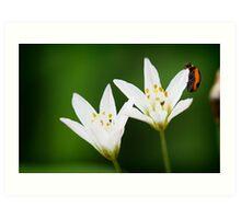 Lady bug on white flower Art Print