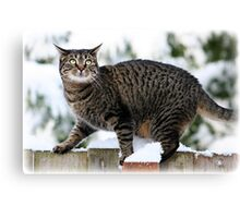 Whitney In the snow on The Fence Canvas Print