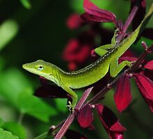 Early Morning Anole by Kathy Baccari