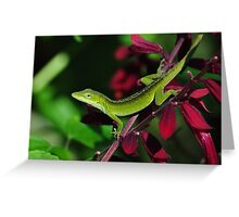 Early Morning Anole Greeting Card