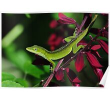 Early Morning Anole Poster