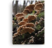 Winter Gills Canvas Print