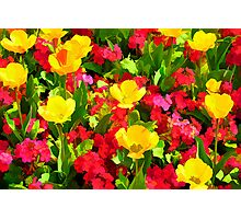 Poppies and Primulas Photographic Print
