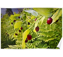 Watermelon Berries Poster