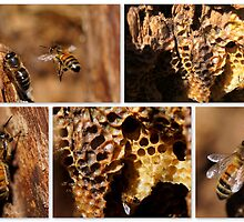 MY HONEY BEES ARE THRIVING! by Betsy  Seeton