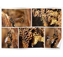 MY HONEY BEES ARE THRIVING! Poster