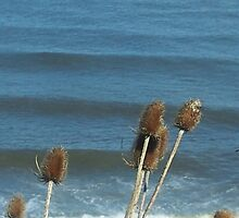 bullrush ocean wave 2 by Sharples1j