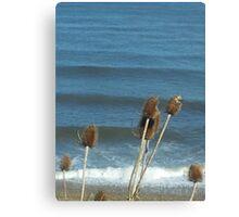 bullrush ocean wave 2 Canvas Print