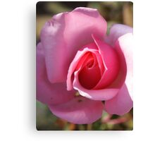 roseflower Canvas Print