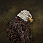 Eagle Profile #2 by Pat Abbott