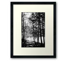 Sunlight through Grainy Trees Framed Print
